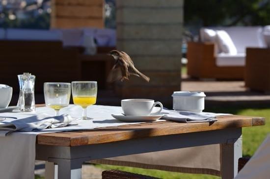 Hotel Can Simoneta: pajaros sobrevolando el desayuno