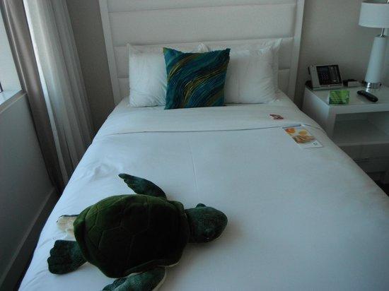 Sonesta Fort Lauderdale Beach: A friendly sea turtle comes by to visit