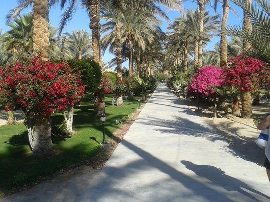 Royal Brayka Beach Resort : viale.....