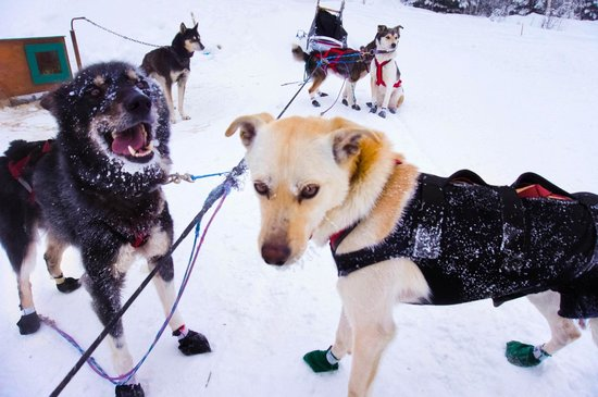 Paws for Adventure: Happy dogs!