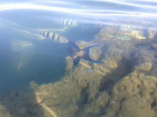 Royal Brayka Beach Resort : pesci ....tra i piedi