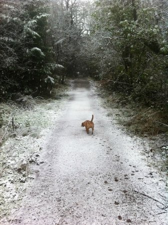 Blessingbourne Apartments: Snowy walk