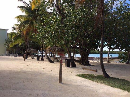 Lime Tree Bay Resort: Parque del hotel
