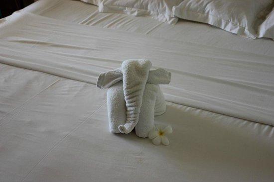 Tropical Attitude: elephant