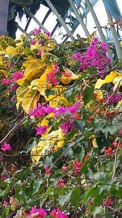 Paradisus Punta Cana: Tropical gardens