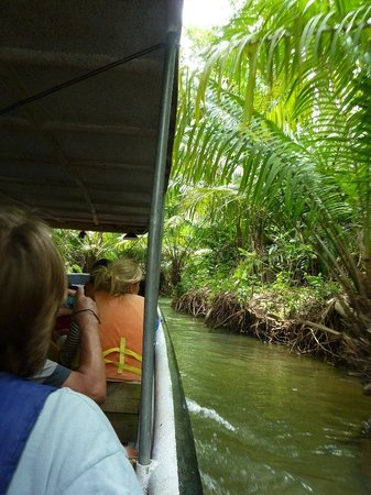 Jungle Land Panama: Day Excursions : Tour underway