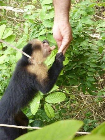 Jungle Land Panama: Day Excursions: Feeding monkeys