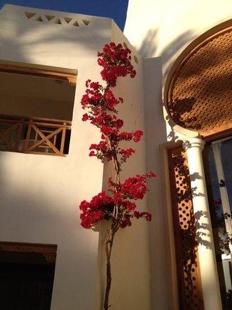Ghazala Gardens Hotel: lovely gardens