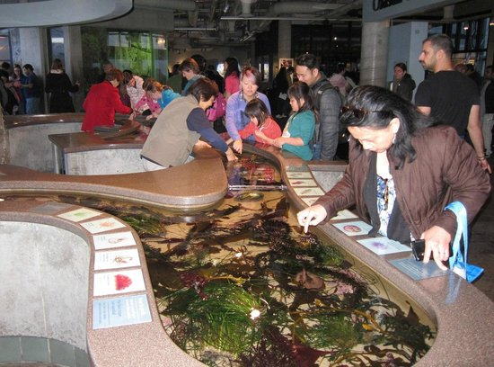 Monterey Bay Aquarium : Touching pools with explainers are very popular