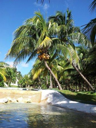 Iberostar Cancun: Palm Trees
