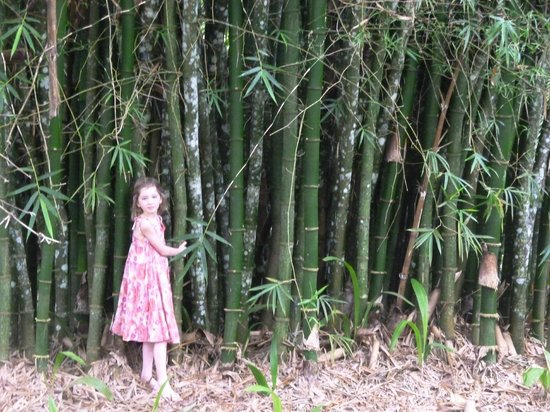 Crystal Paradise Resort: by the bamboo in the grounds between resort & river