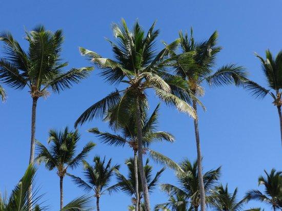 Dreams Palm Beach Punta Cana: Looking up from my beach chair