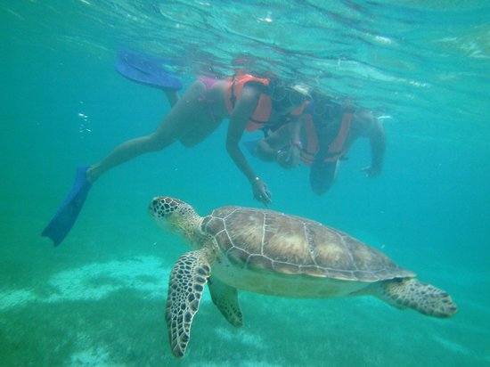 Betina Tours - One Day Private Tours: very close to turtle