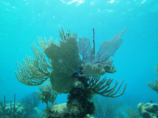 Betina Tours - One Day Private Tours: Coral