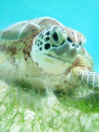 Betina Tours - One Day Private Tours: turtle