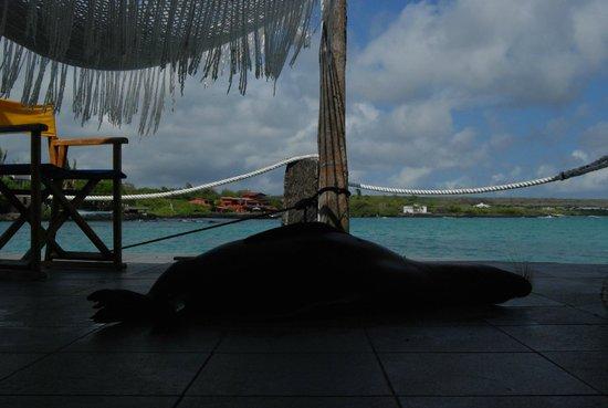 Hotel Solymar : Relaxation