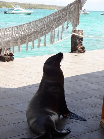 Hotel Solymar: Typical sunbathing sea lion joining us outside