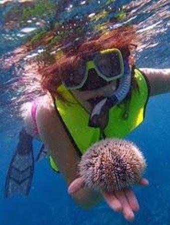 Aruba Bob Snorkeling: We put him right back!