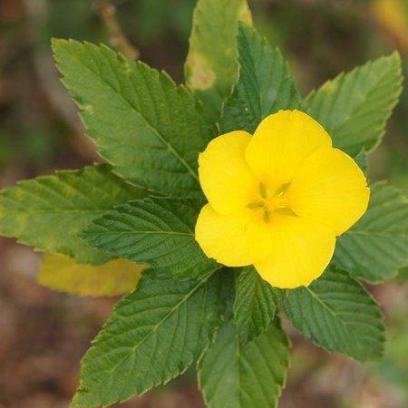 Port St Lucie Botanical Gardens: Flower