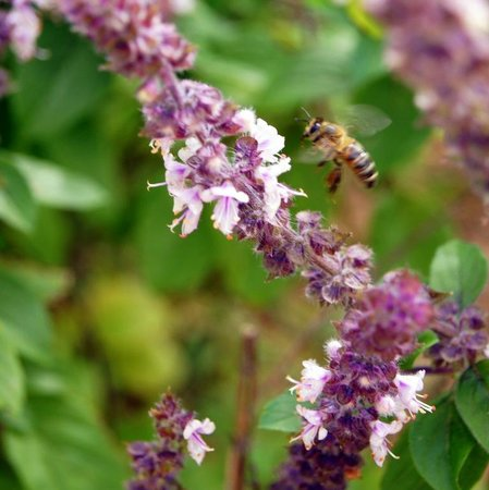 Port St Lucie Botanical Gardens: Flower and bee