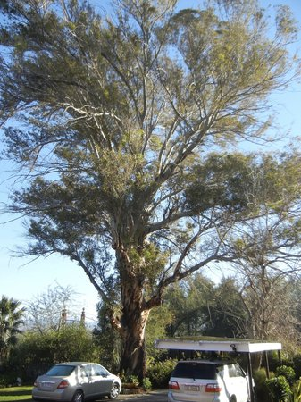 "Gumtree Guest House: ""the gum tree"""
