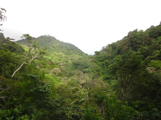 Curi Cancha Reserve : The mountainside with the trees that dance in the wind