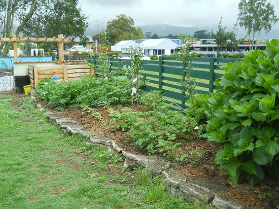 Katikati Motel : garden