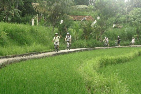 Ubud Bali Bike Tour Rice Terrace Trek Ultimate Balicountrysidetour