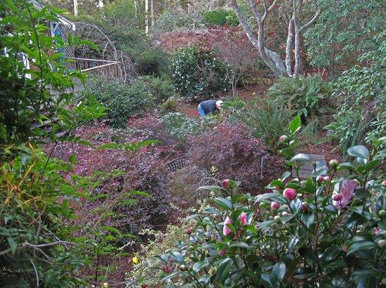 Inverness Secret Garden Cottage : In the Garden