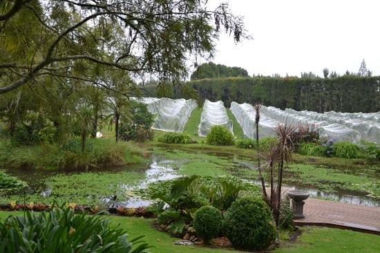 Marsden Estate Winery : Marsdale Winery in Kerikeri NZ