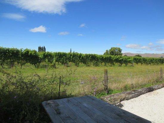 St Leonards Vineyard Cottages: vineyard view