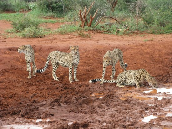Impodimo Game Lodge: Four young brothers
