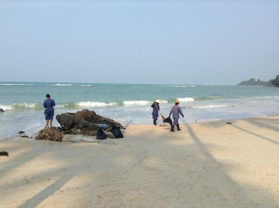 Four Seasons Resort Koh Samui Thailand : La plage et les algues