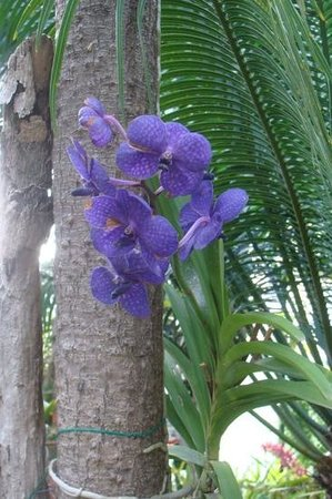 The Residence Porto Mare Porto Bay : Orchid Garden, Porto Mare, Funchal, Madeira