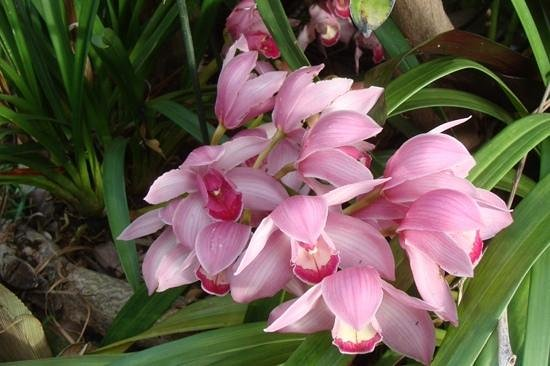 The Residence: Orchid Garden, Porto Mare, Funchal, Madeira