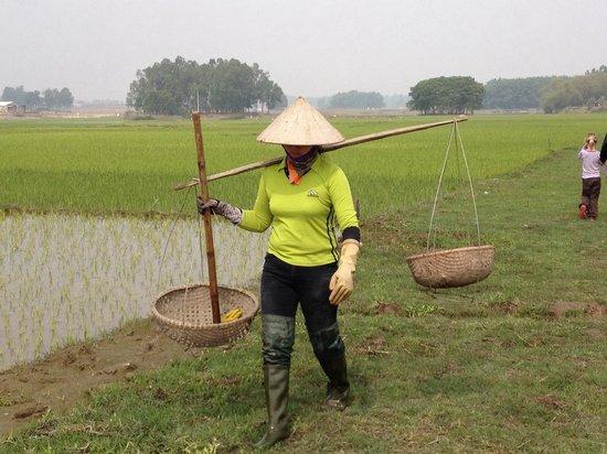 Moon Garden Homestay: Rice field in front of Moon Garden