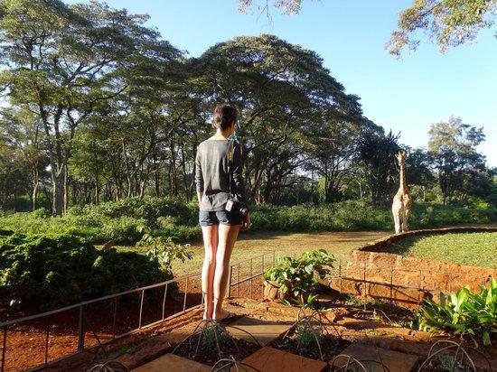 Giraffe Manor: Grounds