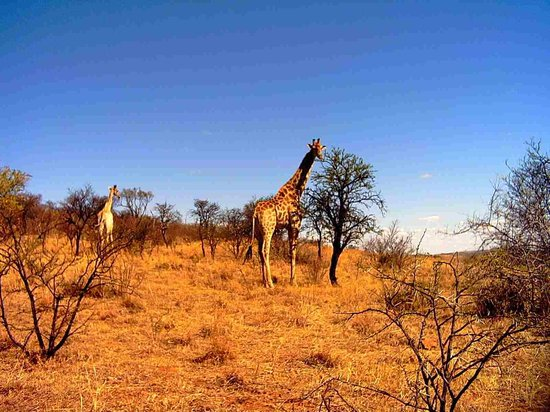 Potchefstroom South Africa Hotels