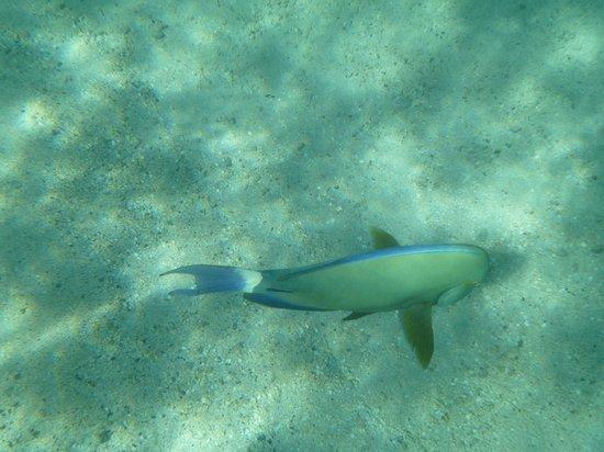 Hanauma Bay Nature Preserve : Fish