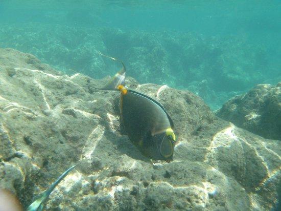 Hanauma Bay Nature Preserve: Fish
