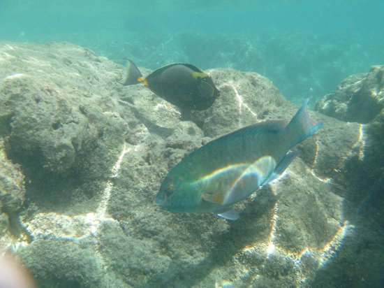 Hanauma Bay Nature Preserve: Fish