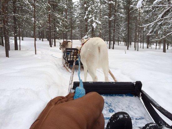Hotel Harriniva: Reindeer sleigh riding