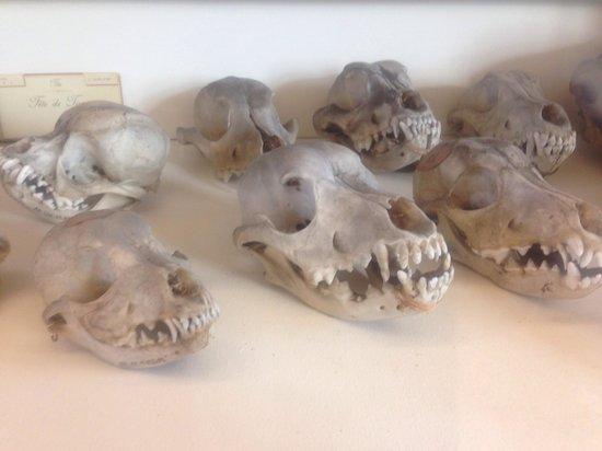 Fragonard Scribe Museum: Skulls at fragonard museum