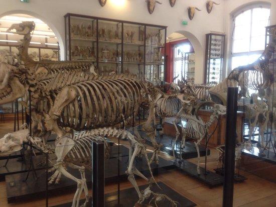 Fragonard Scribe Museum: Fragonard museum