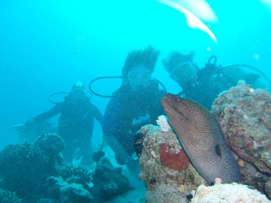 Red Sea Coral Reef Snorkeling at Ras Mohamed National Park with Lunch : COUCOU  MURENE...............