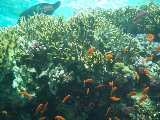 Red Sea Coral Reef Snorkeling at Ras Mohamed National Park with Lunch: NAPOLEON s'en va