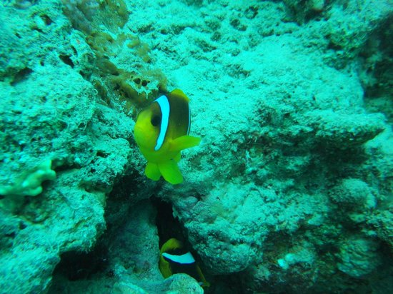 Red Sea Coral Reef Snorkeling at Ras Mohamed National Park with Lunch: Tu as bien vu ma Gueule de CLOWN