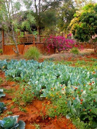 Shreyas Yoga Retreat: cabbage patch