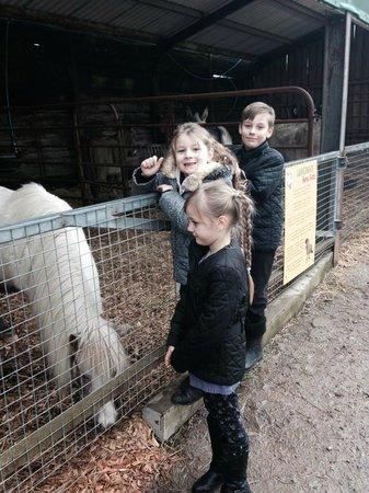 Longdown Activity Farm: Happy faces :)