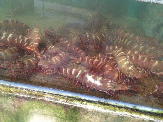Kan Eang@Pier: Fresh Lobster